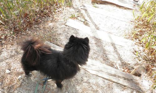 犬の散歩と登山